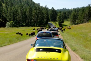 bisoncrossing_porsches_700x468