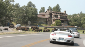 Custer State Park Game Lodge